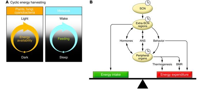 journal of clinical sleep medicine author guidelines